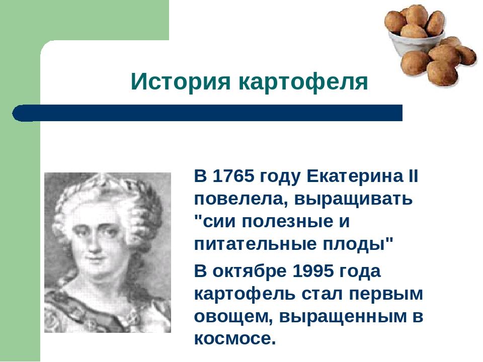 История картофеля В октябре 1995 года картофель стал первым овощем, выращенны...