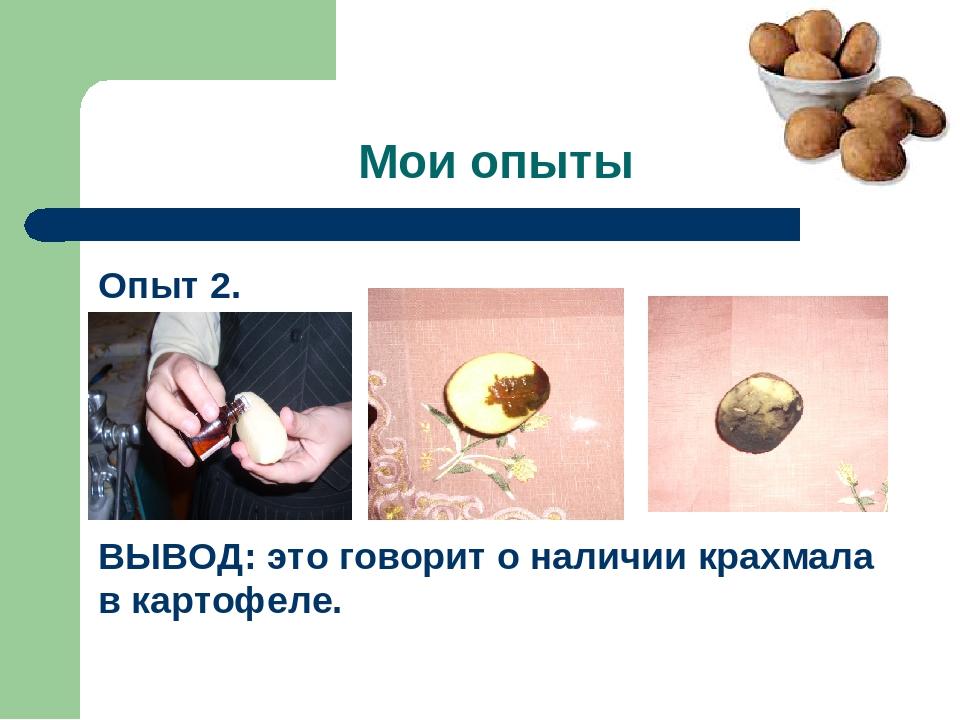 Мои опыты Опыт 2. ВЫВОД: это говорит о наличии крахмала в картофеле.