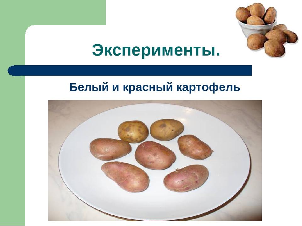 Эксперименты. Белый и красный картофель