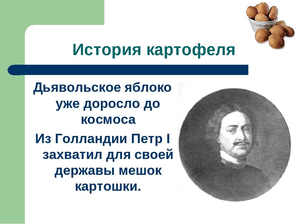 История картофеля Дьявольское яблоко уже доросло до космоса Из Голландии Петр...