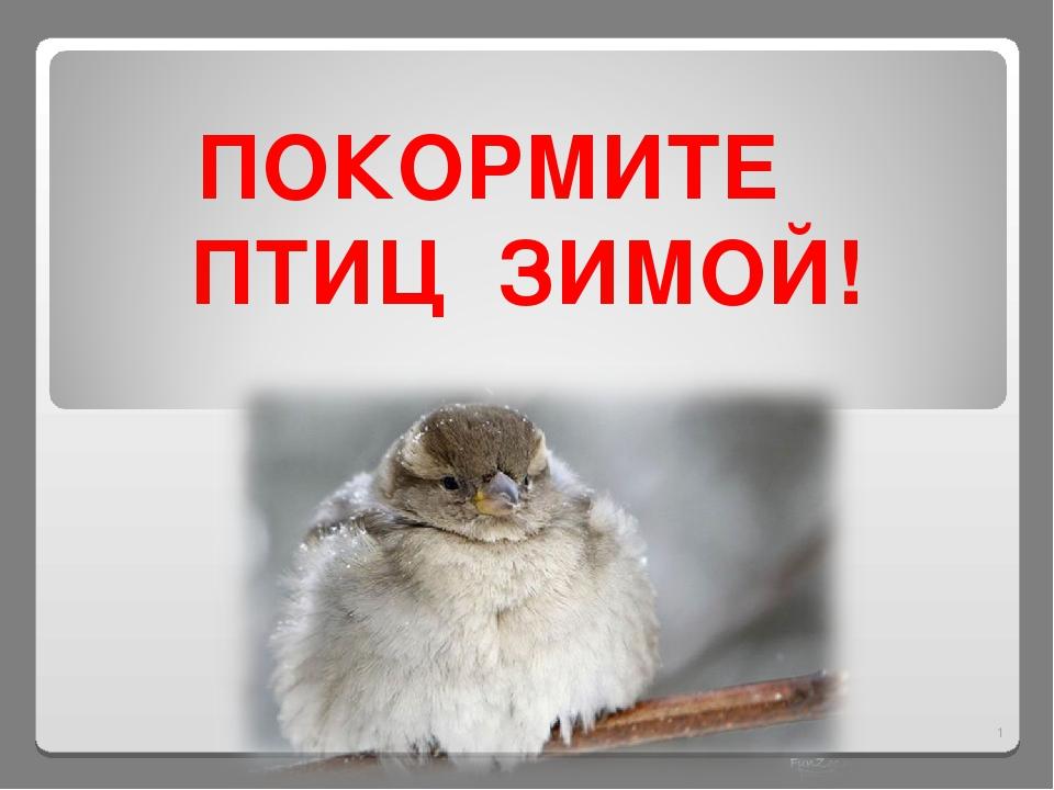 ПОКОРМИТЕ ПТИЦ ЗИМОЙ! *