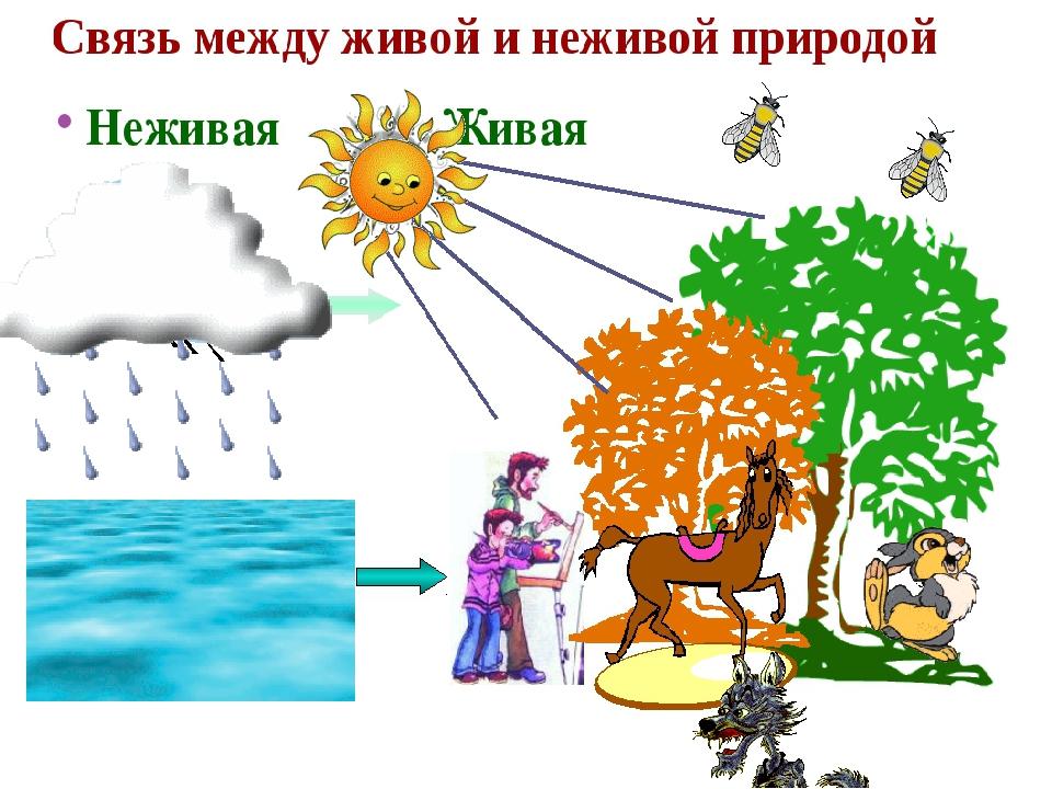 Связь в природе между природой картинки