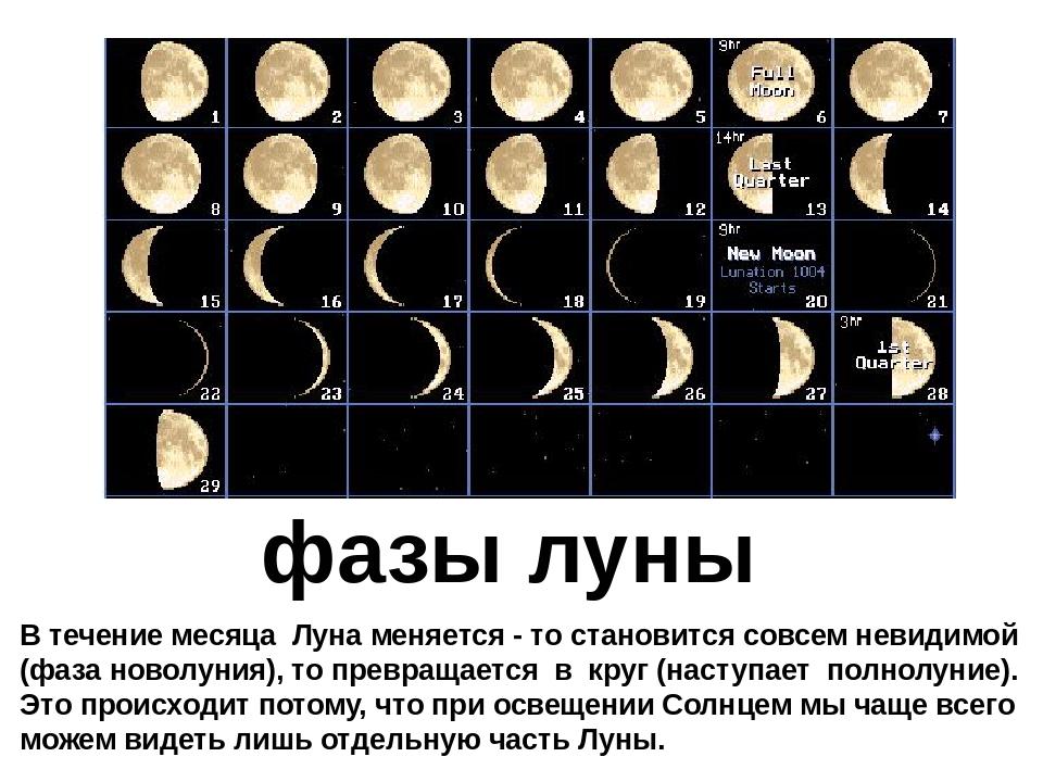 крапчатый фазы луны какие бывают фото выдается напрокат, желанию