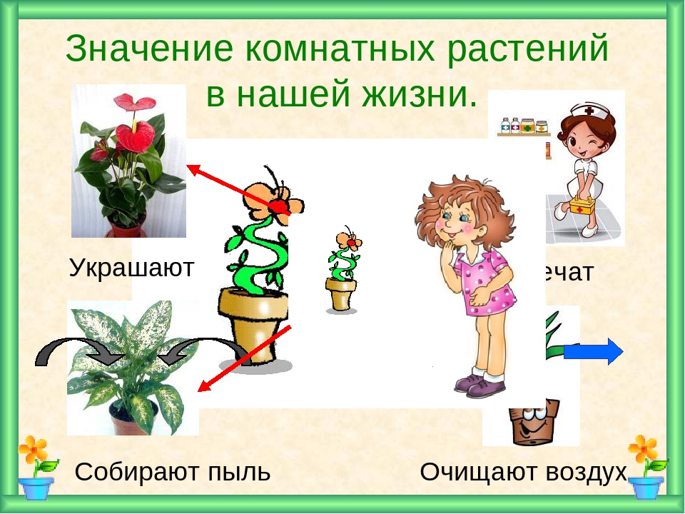 нод знакомство с комнатными растениями