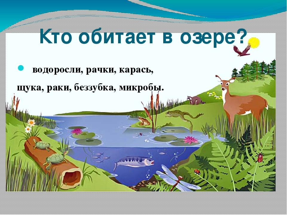 Кто обитает в озере? водоросли, рачки, карась, щука, раки, беззубка, микробы.
