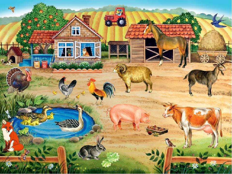 картинка скотный двор домашние животные каким-то причинам