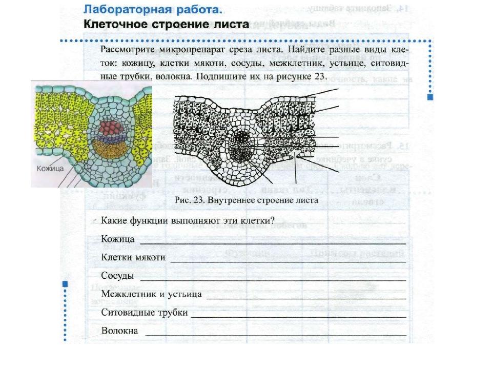 Листа клеточное гдз строение класс таблица 6