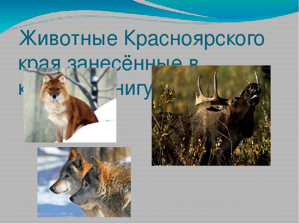 картинки животных красной книги красноярского края понадобится только трафарет