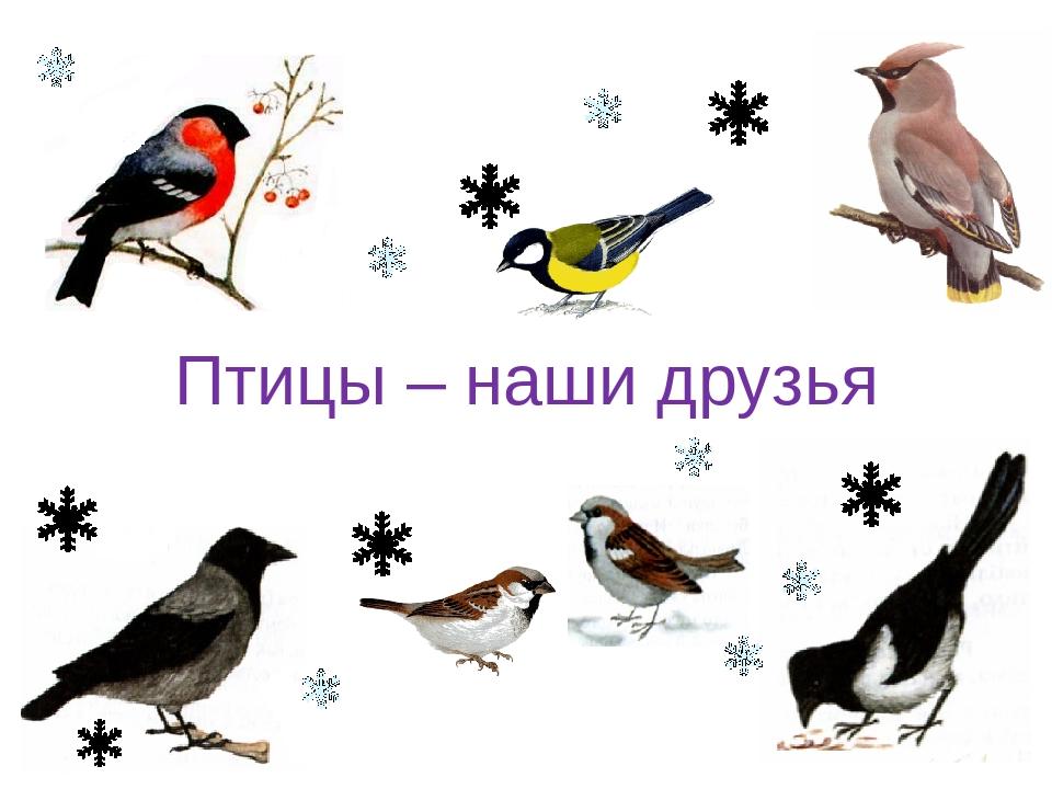 картинка птицы наши друзья худи синие