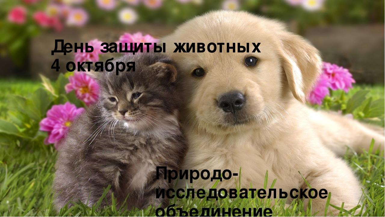 открытка день животных того назначения