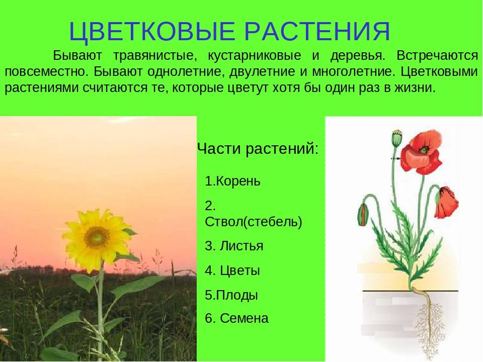 все картинки и название цветковые гастроли неизменно