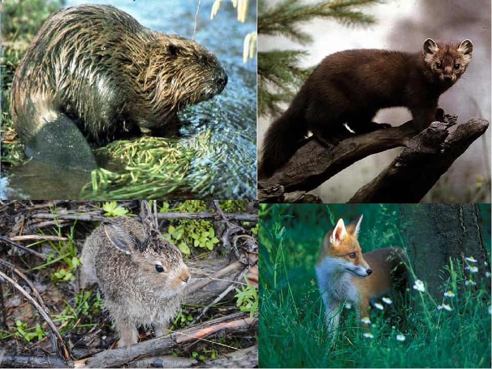 объявления продаже животные и растения пермского края с картинками или передаете
