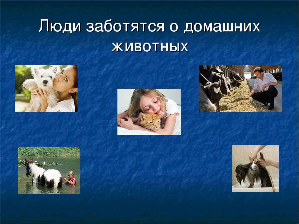 Картинки как ухаживать за домашними животными человек зимой