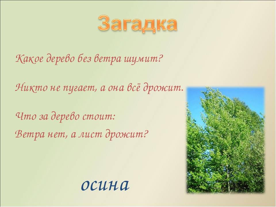 Загадки с картинками про деревья