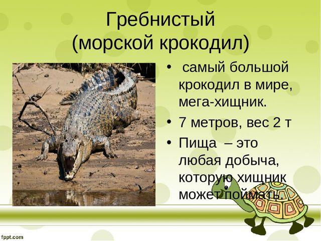 Про Крокодилов Класс Реферат Про Крокодилов 7 Класс