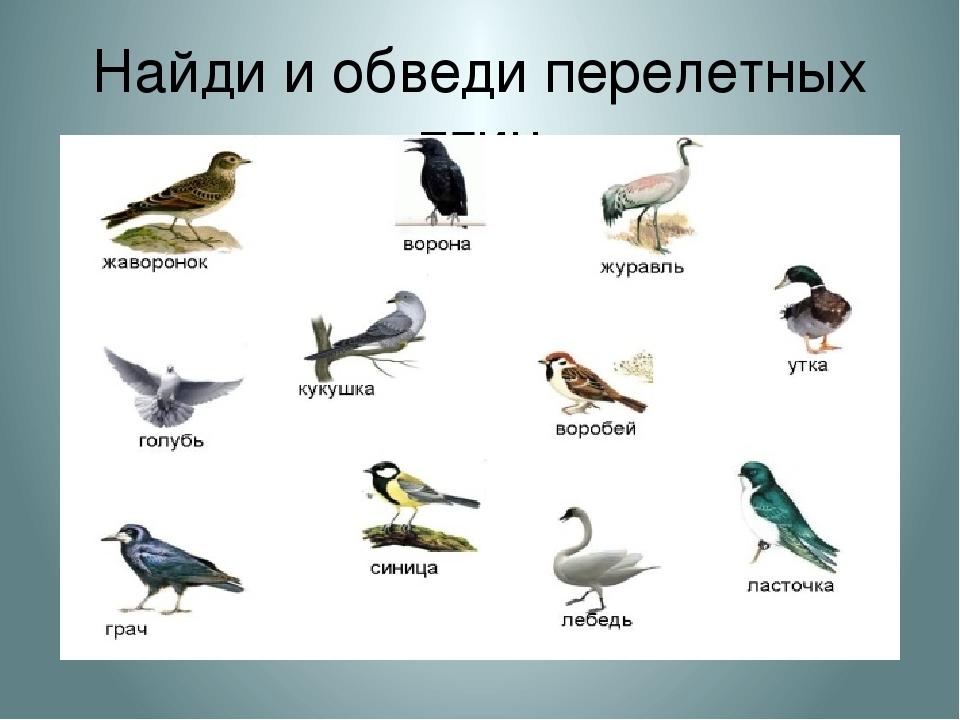 Картинки перелетные птицы для детского сада с названиями, открытки