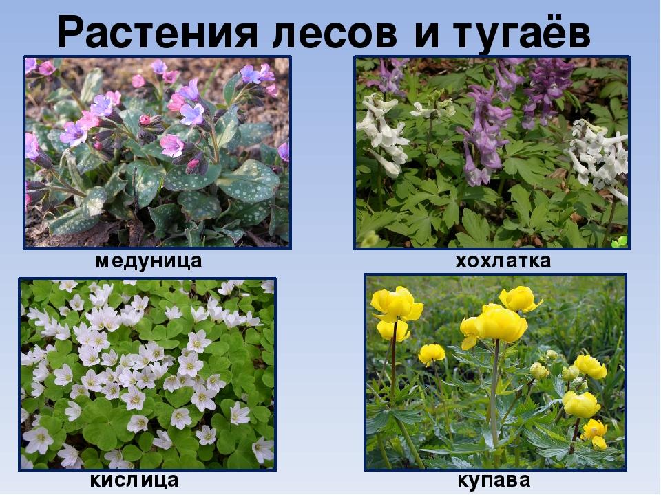 дворе название растений с картинками лесных общего