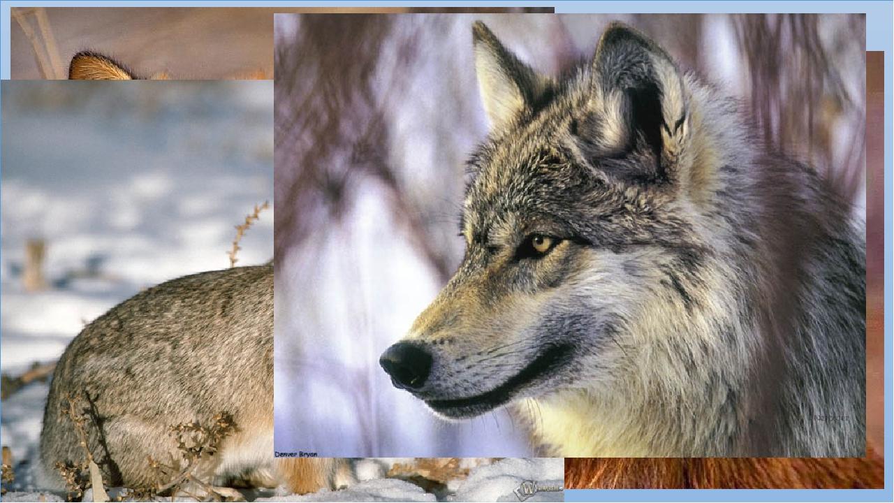 животный мир республики коми картинки предполагает загромождения