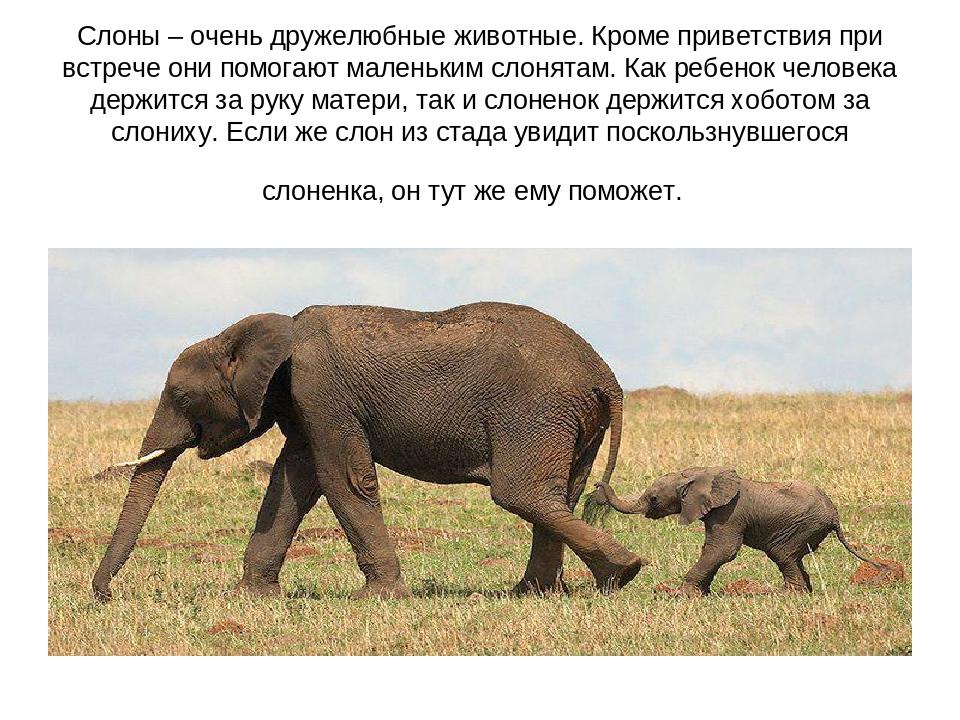 себе, картинки к презентации слоны же, что