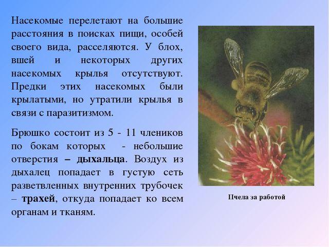 Пчела за работой Насекомые перелетают на большие расстояния в поисках пищи,...