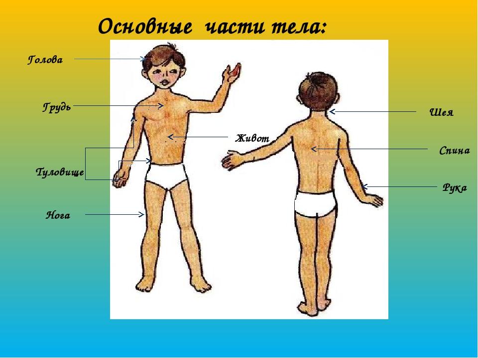 Картинки частями тела человека