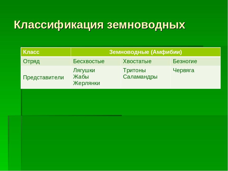 Классификация земноводных КлассЗемноводные (Амфибии) ОтрядБесхвостыеХвост...