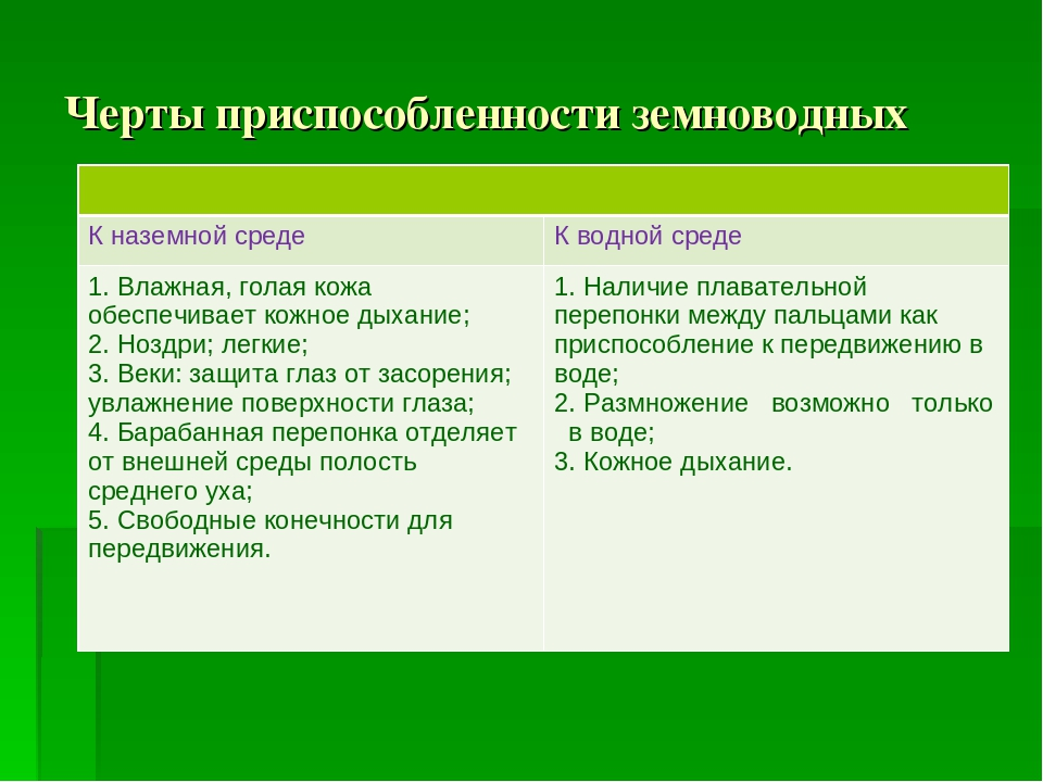 Черты приспособленности земноводных  К наземной средеК водной среде 1. Влаж...
