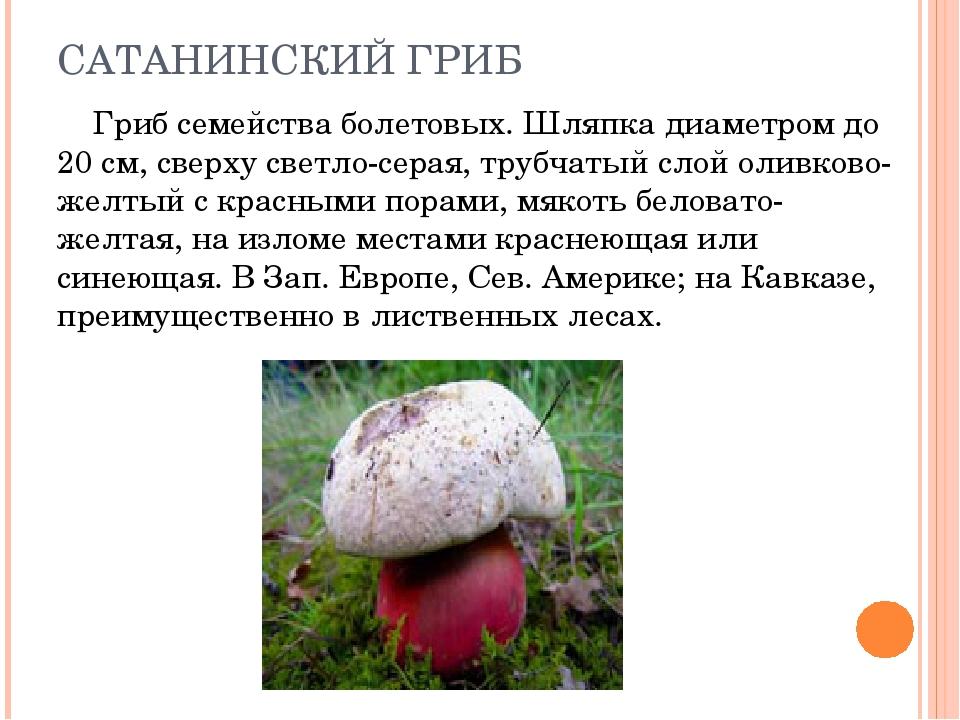 вам открытку ядовитые грибы фото и описание кратко фотосессия кипре