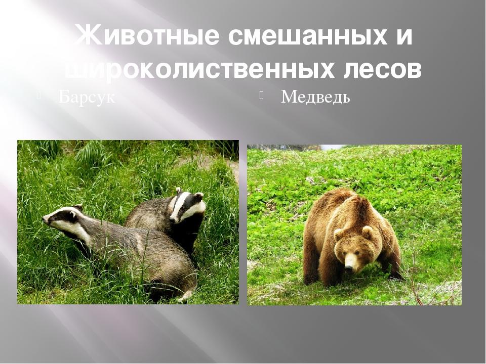 Какие животные обитают в смежанныхи широколиственных лесах