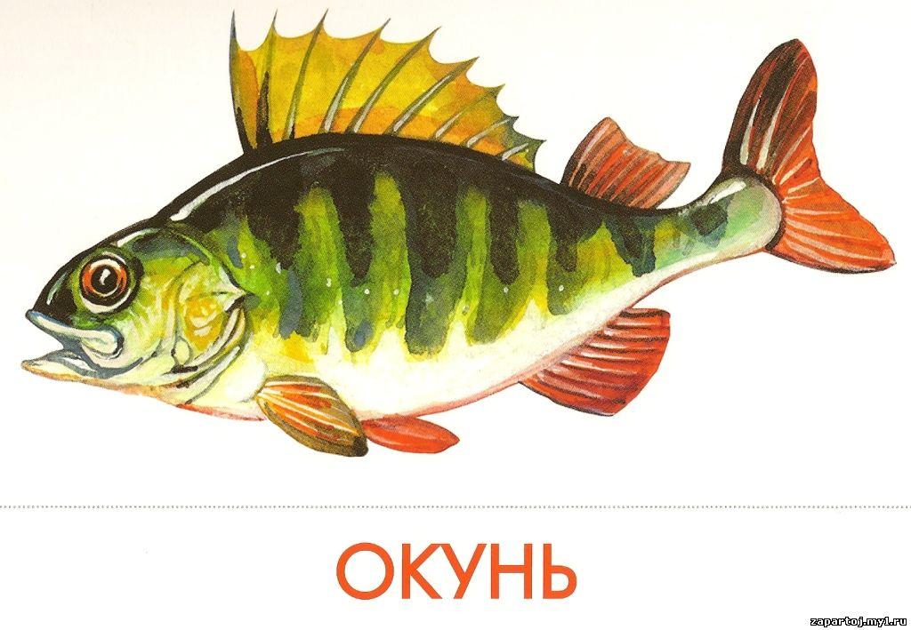 Описание рыб с картинками для детей