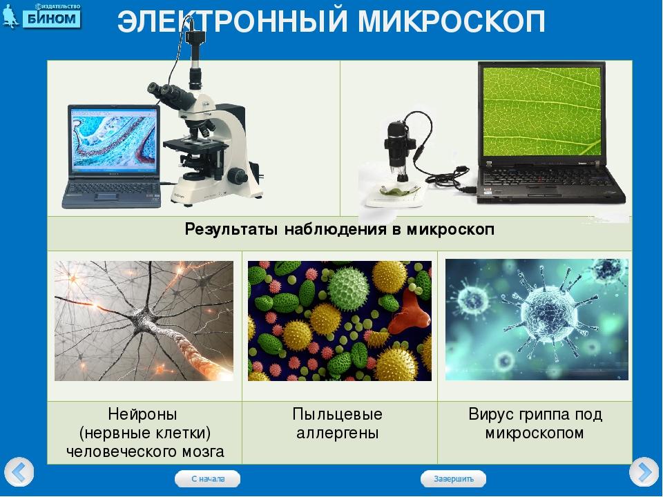 ЭЛЕКТРОННЫЙ МИКРОСКОП Результаты наблюдения в микроскоп Нейроны (нервные клет...