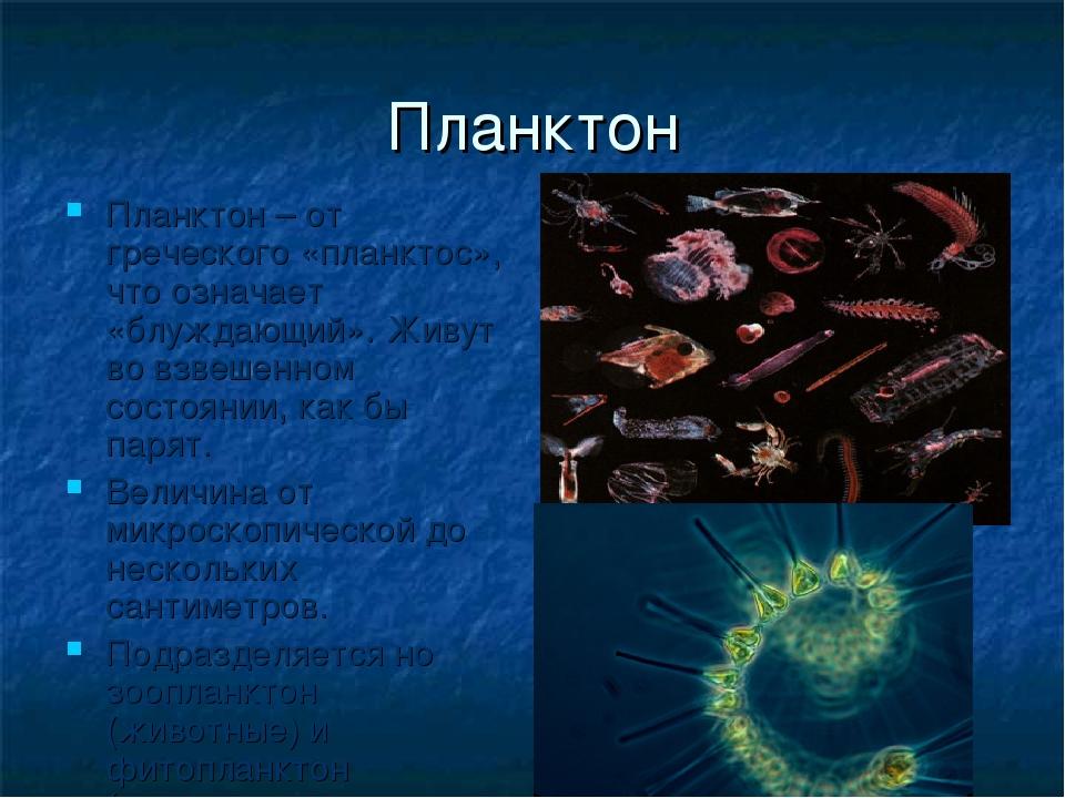 Планктон Планктон – от греческого «планктос», что означает «блуждающий». Живу...