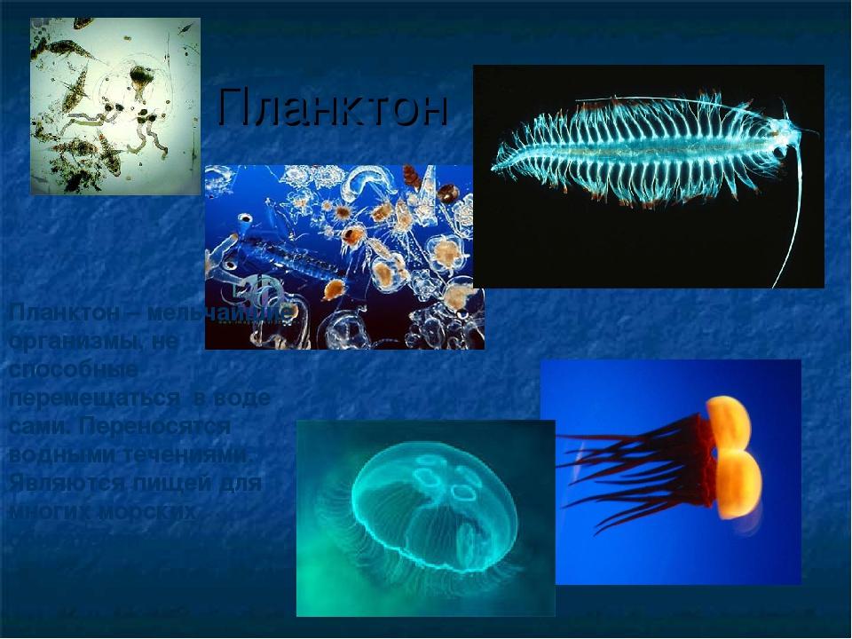 Планктон Планктон – мельчайшие организмы, не способные перемещаться в воде са...
