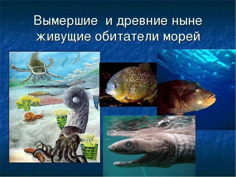Вымершие и древние ныне живущие обитатели морей