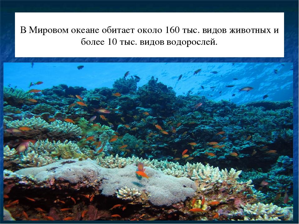 В Мировом океане обитает около 160 тыс. видов животных и более 10 тыс. видов...