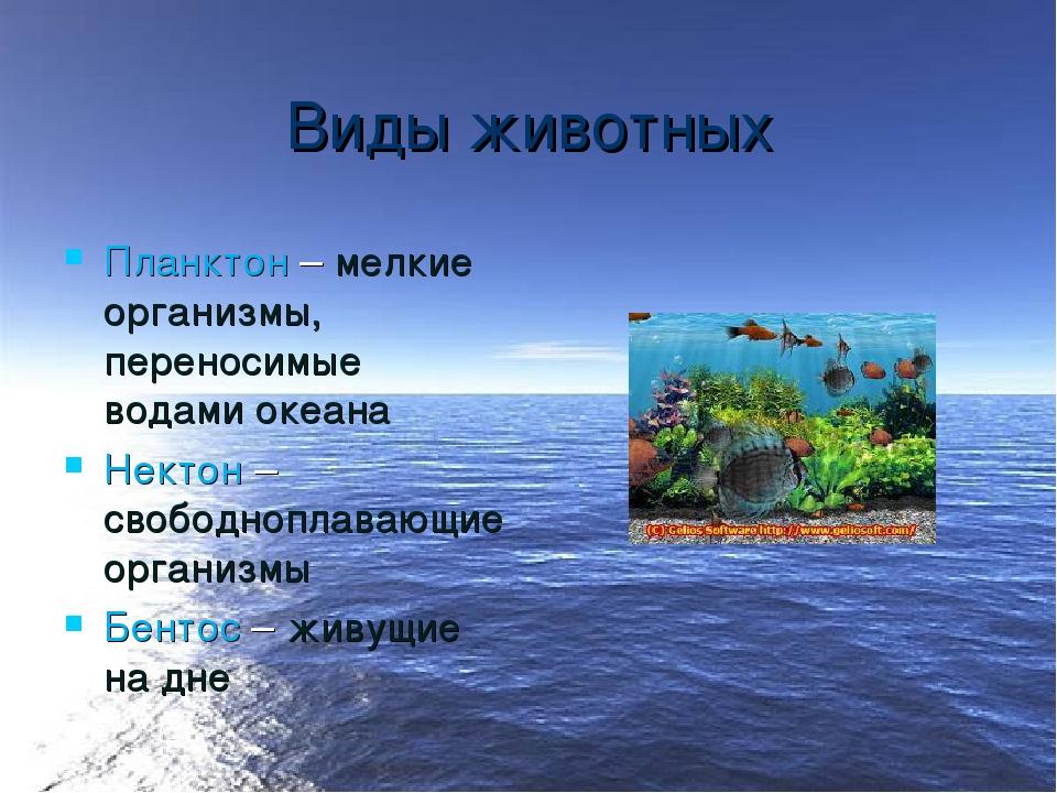 Виды животных Планктон – мелкие организмы, переносимые водами океана Нектон –...