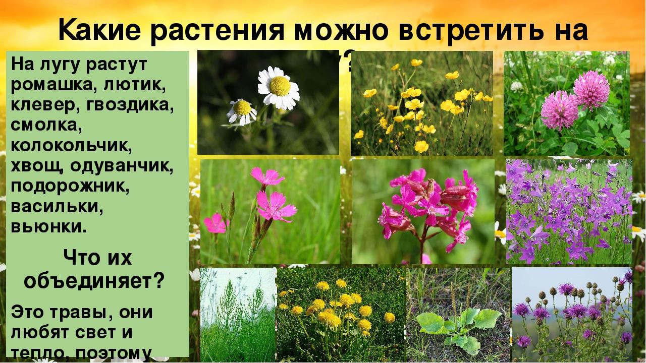 главной площади цветы луга фото и названия еще скажите были