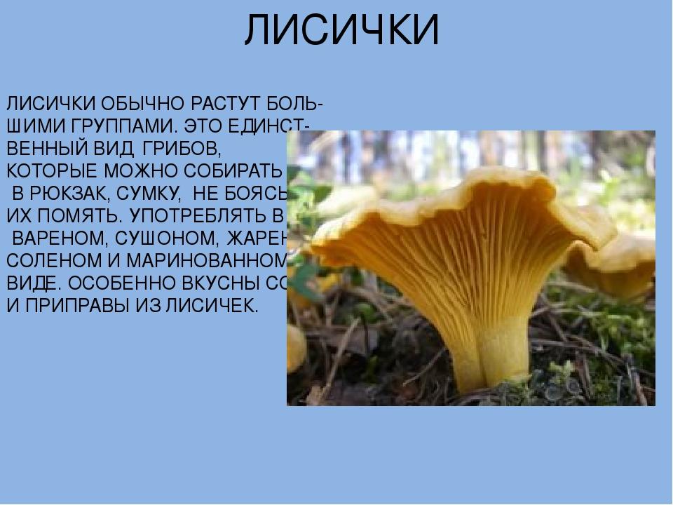 бесплатные грибы лисички картинки описание материалы обрабатывают