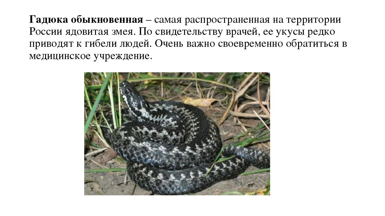 Ядовитые животные фото и описание