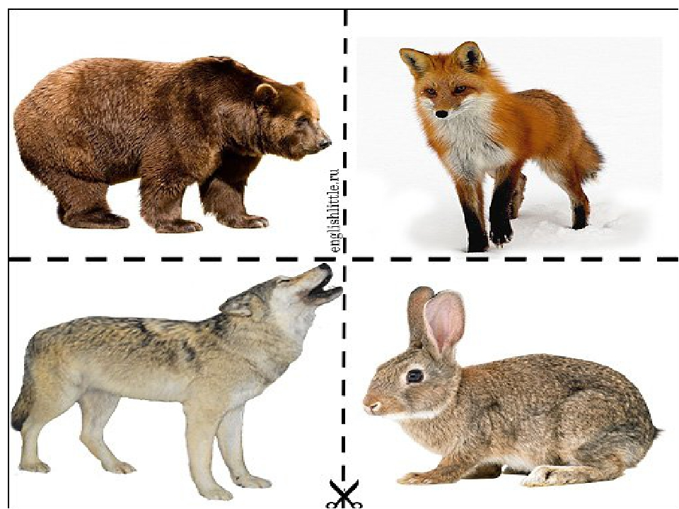 Картинки медведя зайца лисы волка