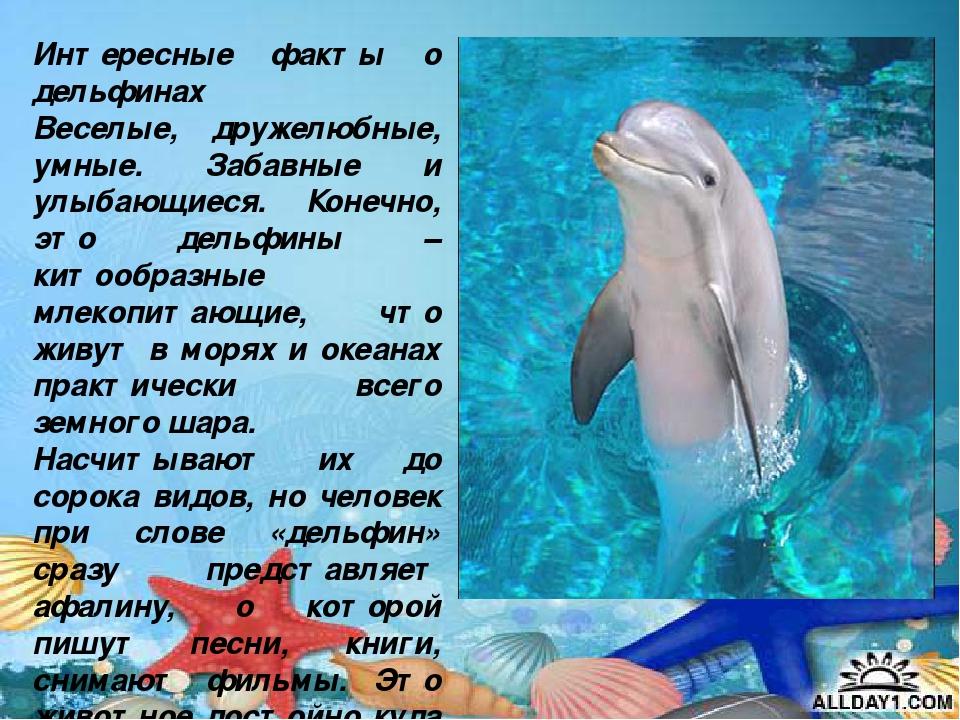 Дельфины интересные факты для детей