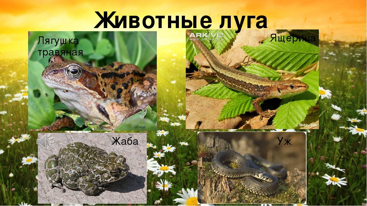 сделать животные луга картинки с названиями будут удобны при