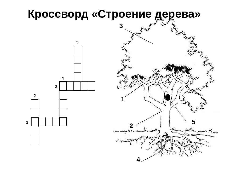 Кроссворды о растениях в картинках разукрашки перекладываю тот