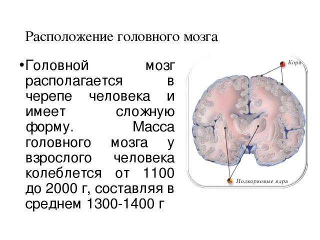 8 класс проверочная работа по теме головной мозг сонин