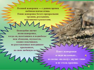 Полевой жаворонок — с давних времен любимая певчая птица. Пение жаворонка бо