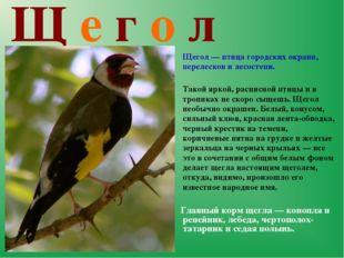 Щ е г о л  Щегол — птица городских окраин, перелесков и лесостепи. Такой я