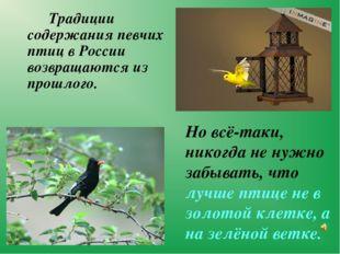 Традиции содержания певчих птиц в России возвращаются из прошлого.  Но вс