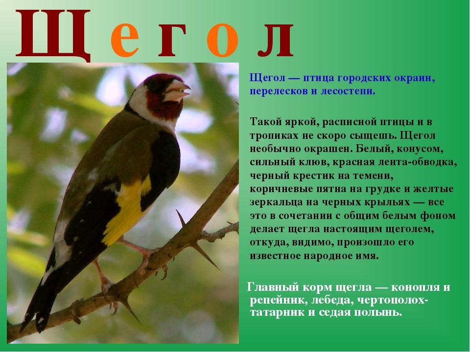 Щ е г о л  Щегол — птица городских окраин, перелесков и лесостепи. Такой я...