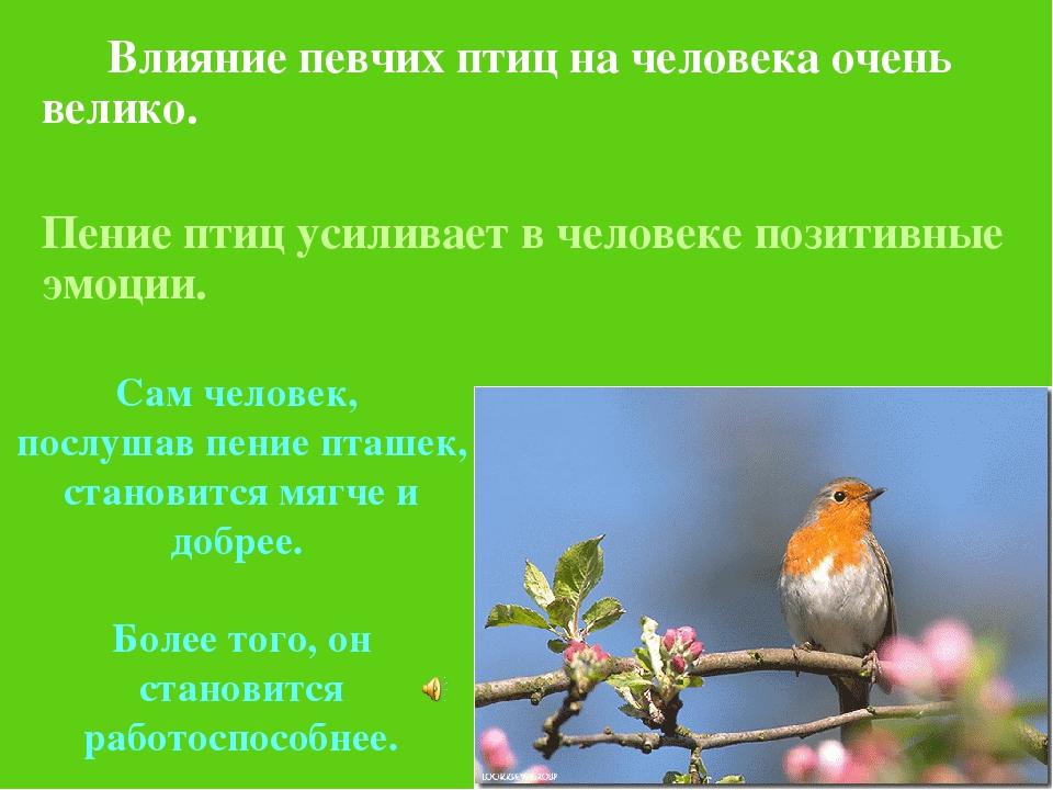 Влияние певчих птиц на человека очень велико. Пение птиц усиливает в челов...