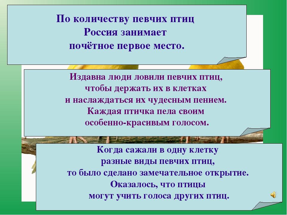 По количествупевчих птиц Россиязанимает почётное первое место. Издавна люди...